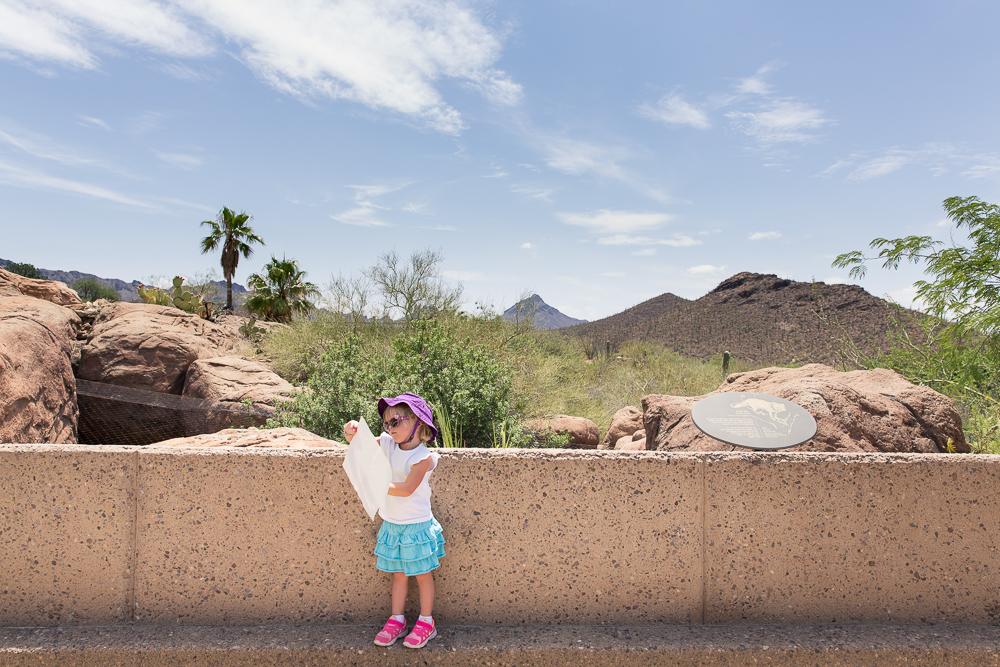 Desert museum WR-1387