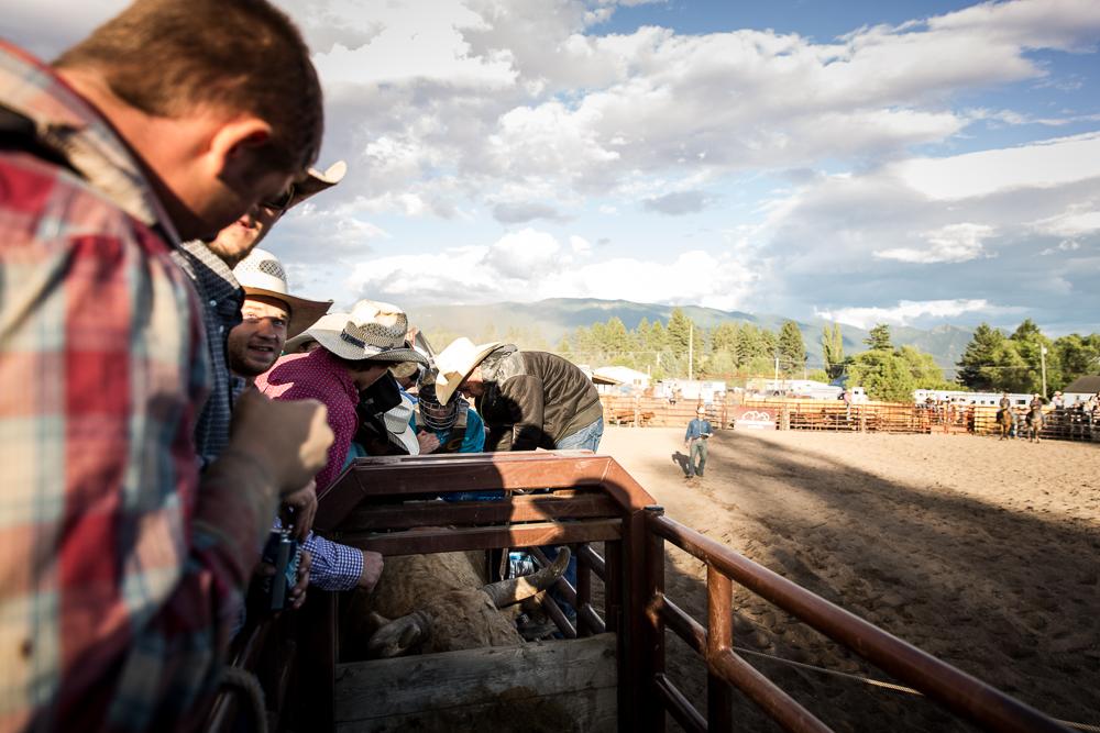 YOLO Montana Rodeo wr-2601
