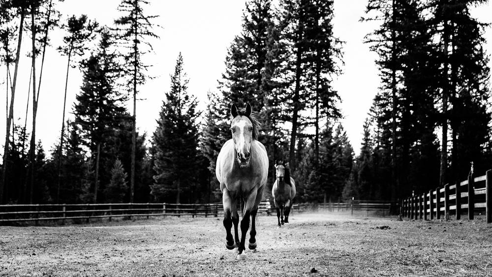 Montana yolo wr-2482