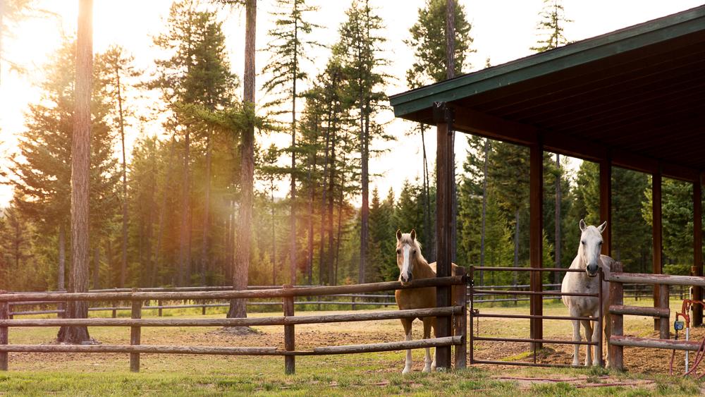 Montana yolo wr-
